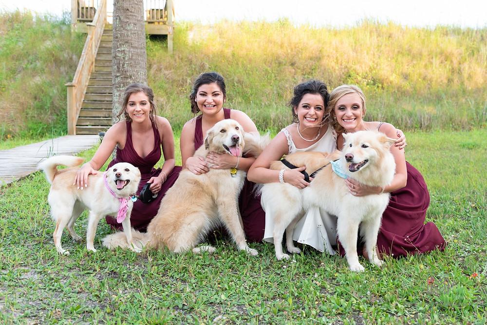 Puppies in wedding photos