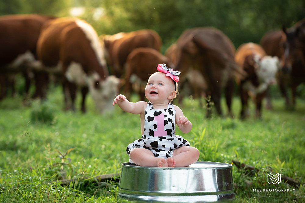 One year old cow themed birthday photoshoot in a cow pasture in New Cumberland, WV