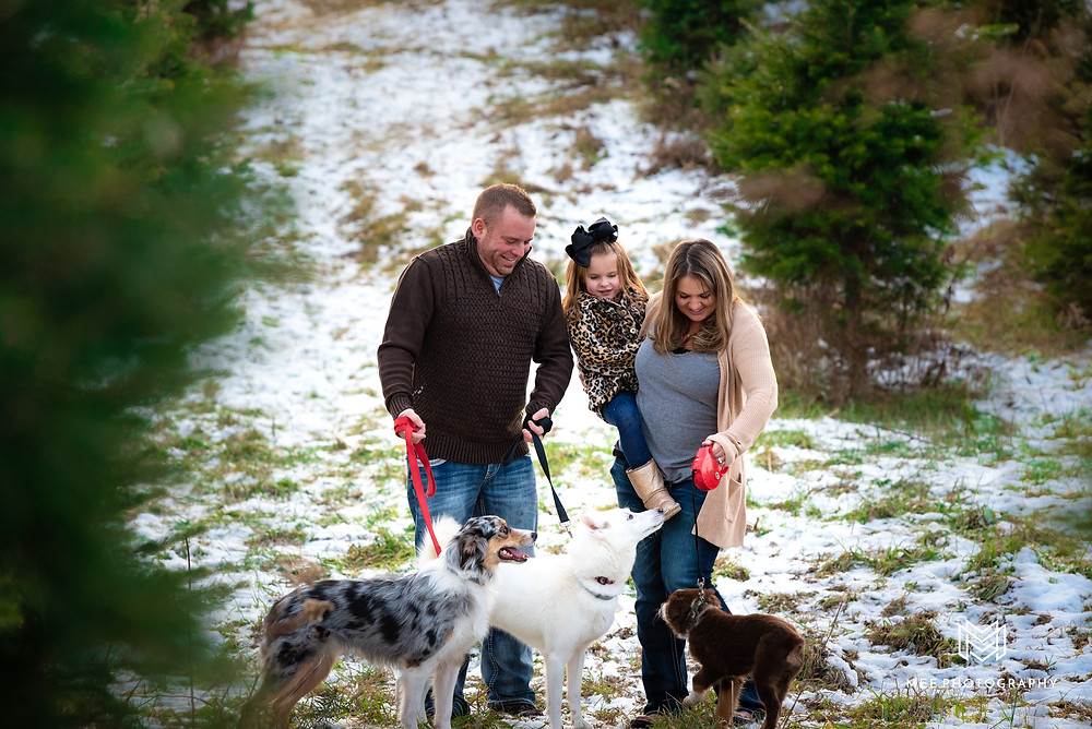 Christmas tree farm family pictures with dogs at Windy Hill Tree Farm in East Liverpool, OH.