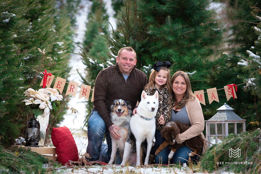 Christmas tree farm mini session with dogs at Windy Hill Tree Farm in East Liverpool, Ohio.