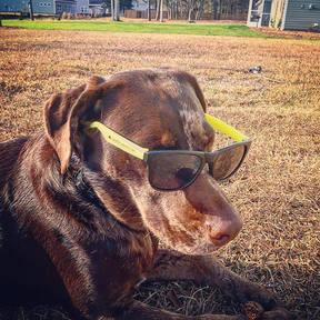 James Island Dog Park / Charleston, SC