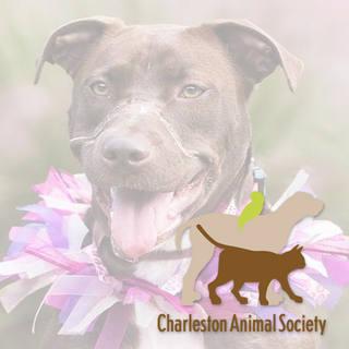 Charleston Animal Society - Charleston, SC