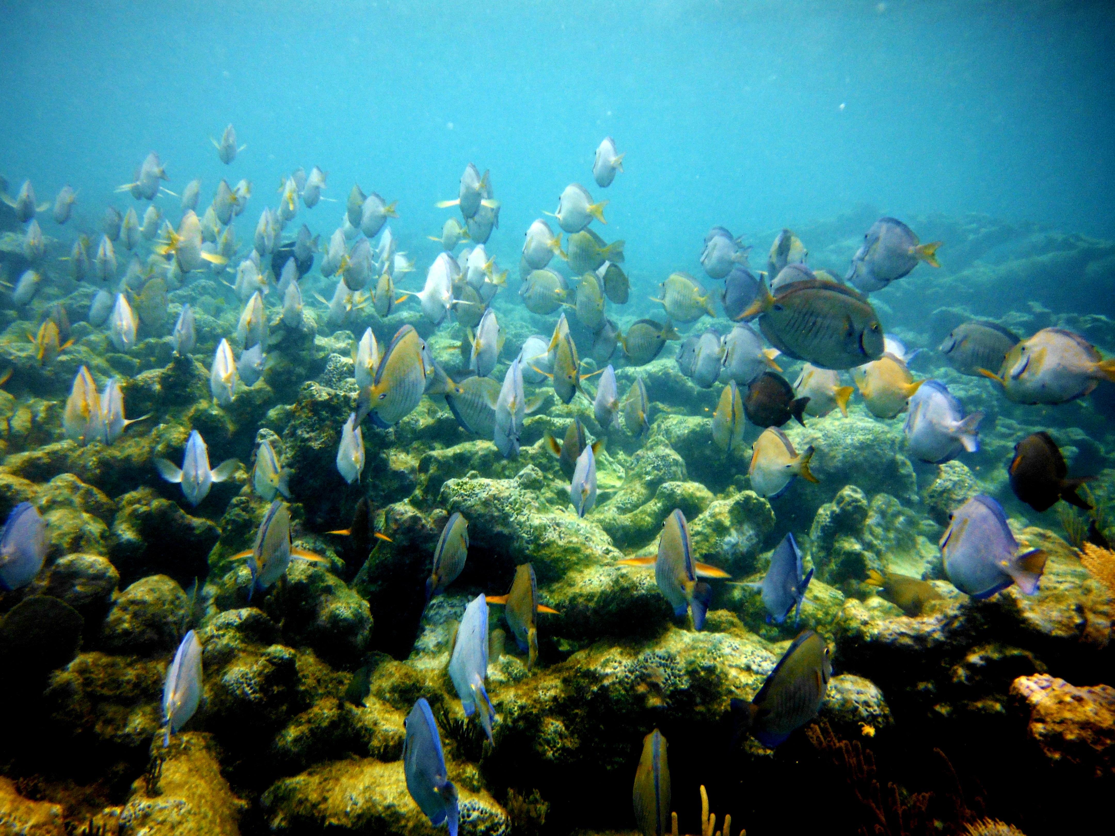 Coralenriff in Puerto Morelos