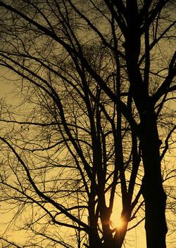 arbre08