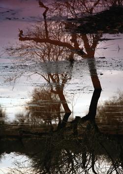 arbre04