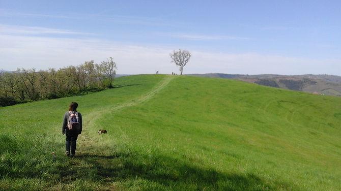 randonnée autour de St Izaire en Aveyron