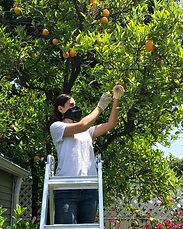oranges2.png