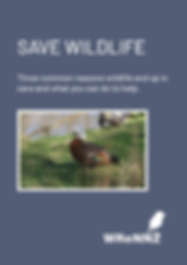 Save Wildlife eBook