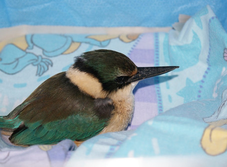 First Aid For A Sick Or Injured Bird