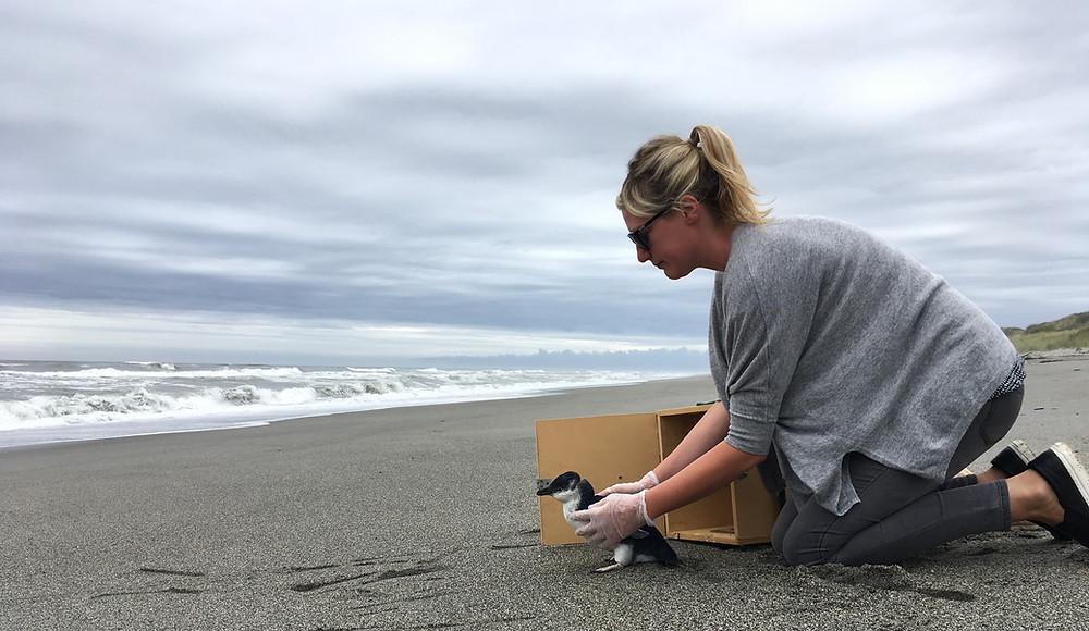 Blue Penguin Release