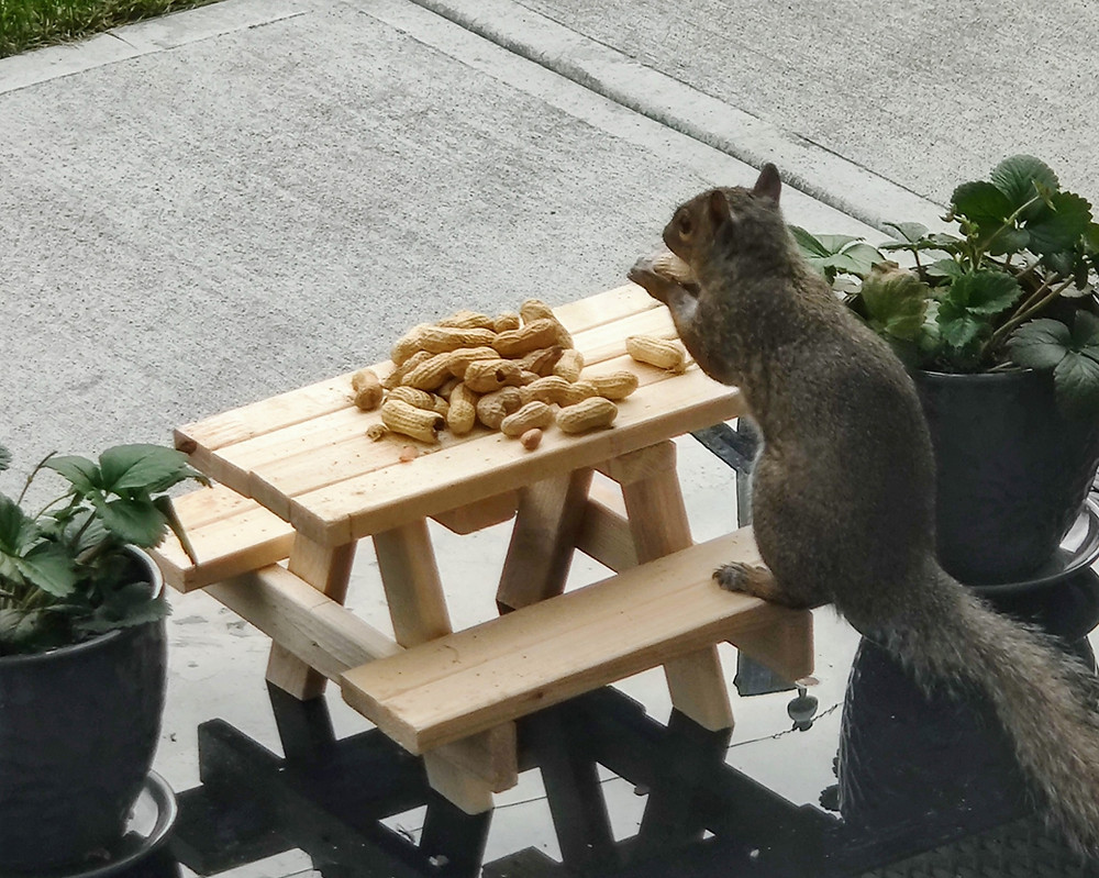 A squirrel eating peanuts at a miniature wooden picnic table.