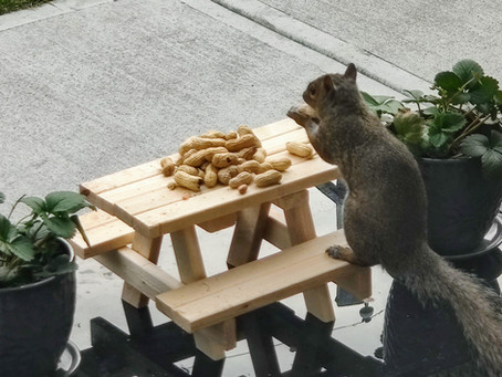 From squirrel picnics to fixing the system