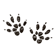 hamster paw prints scribble.png