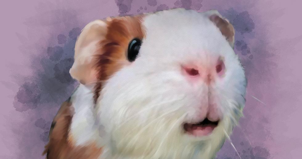 guinea%20pig%20acrylic%20wc%20small_edit