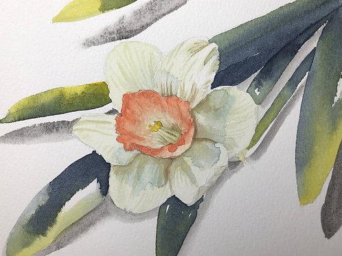 Daffodil Post Card