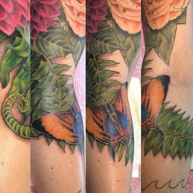 Butterfly and Fern