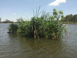 Floating Treatment Wetlands