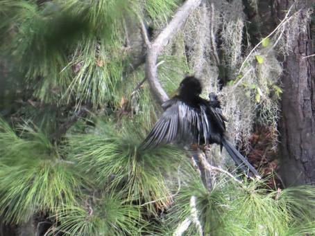 Thursday, Morning Bird Ramble