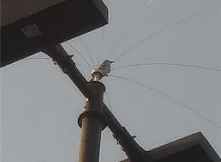 Late Gray Kingbirds