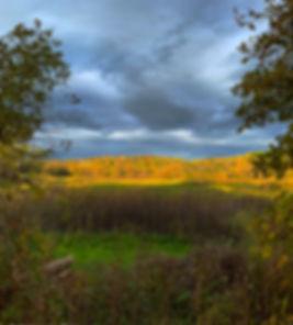 2_WetlandsFall19_v1WEB.jpg