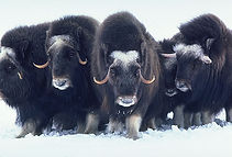 Creatures of the Ice Age (2).jpg