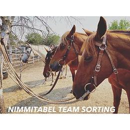 Nimmitabel Team Sorting.jpg