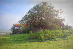 Old House Tree