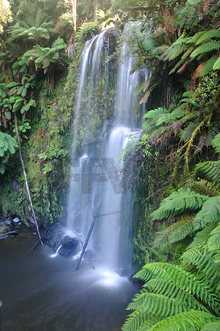 Beauchamps Falls Otway National Park Victoria