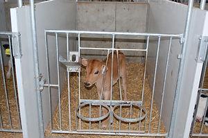 Standard Calf Zone_2.JPG