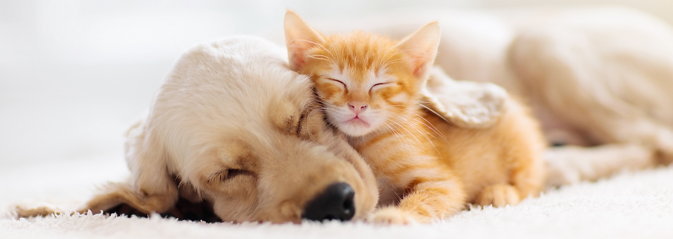 Cat%252520and%252520dog%252520sleeping%252520together.%252520Kitten%252520and%252520puppy%252520taki