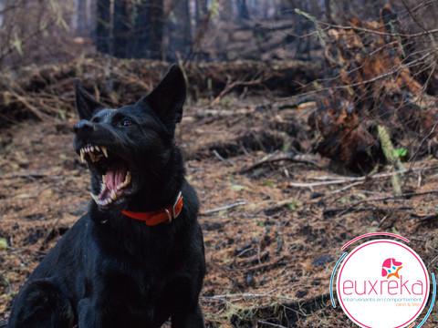 Huit conseils pour aider les chiens craintifs à se sentir en sécurité