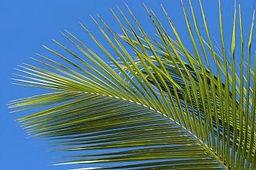 palme1.jpg
