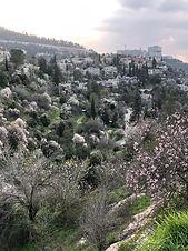 סדנת עין כרם בנוף הרי ירושלים