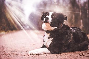 dog-2201996_960_720.jpg