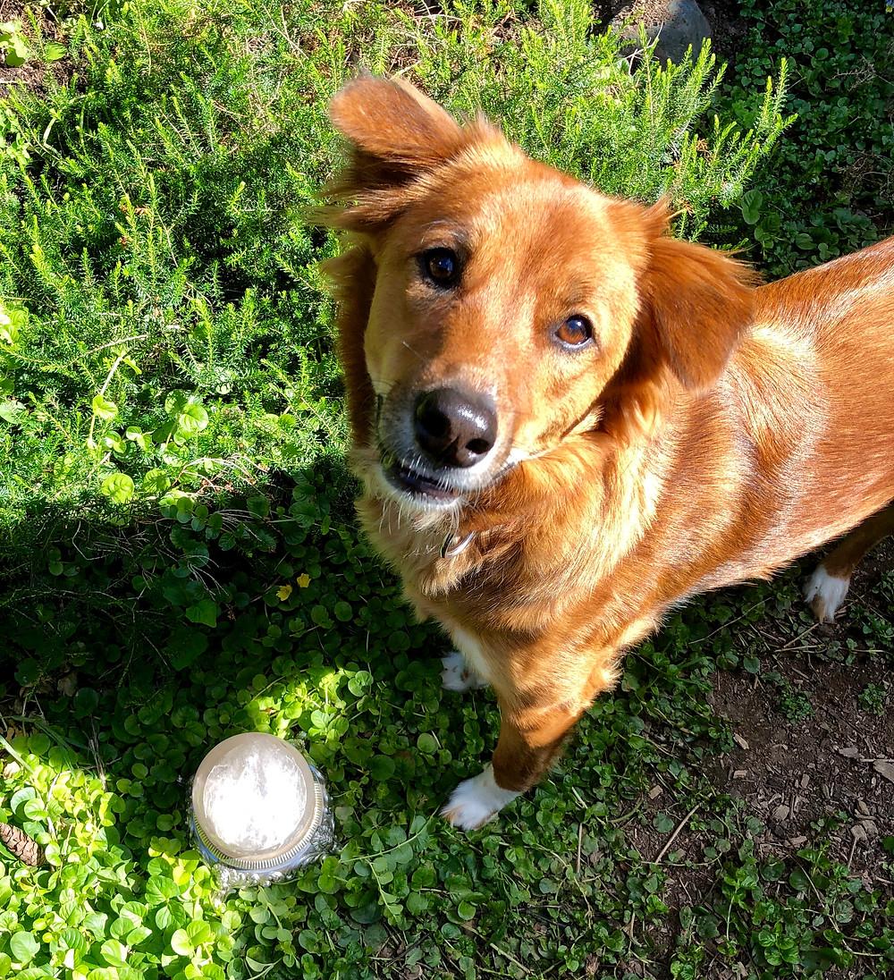 Ruby dog with crystal ball.