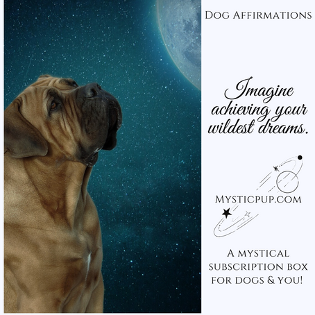 Positive Affirmations For Dogs