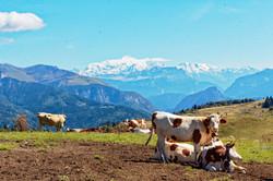 Le Mont Blanc vu de la Pointe de Miribel - Villard (Vallée Verte)