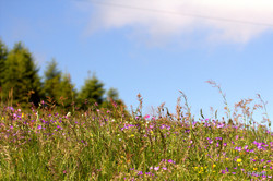 Thollon Alpages fleuris