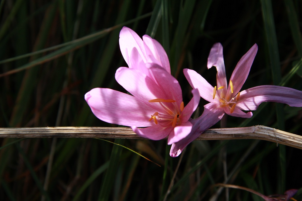 Flore d'automne