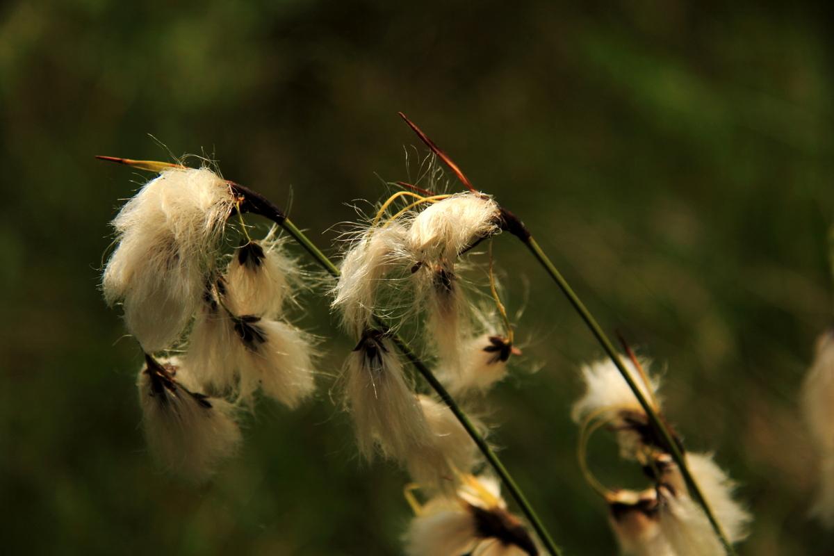 Marais du Maravant Pays de Gavot