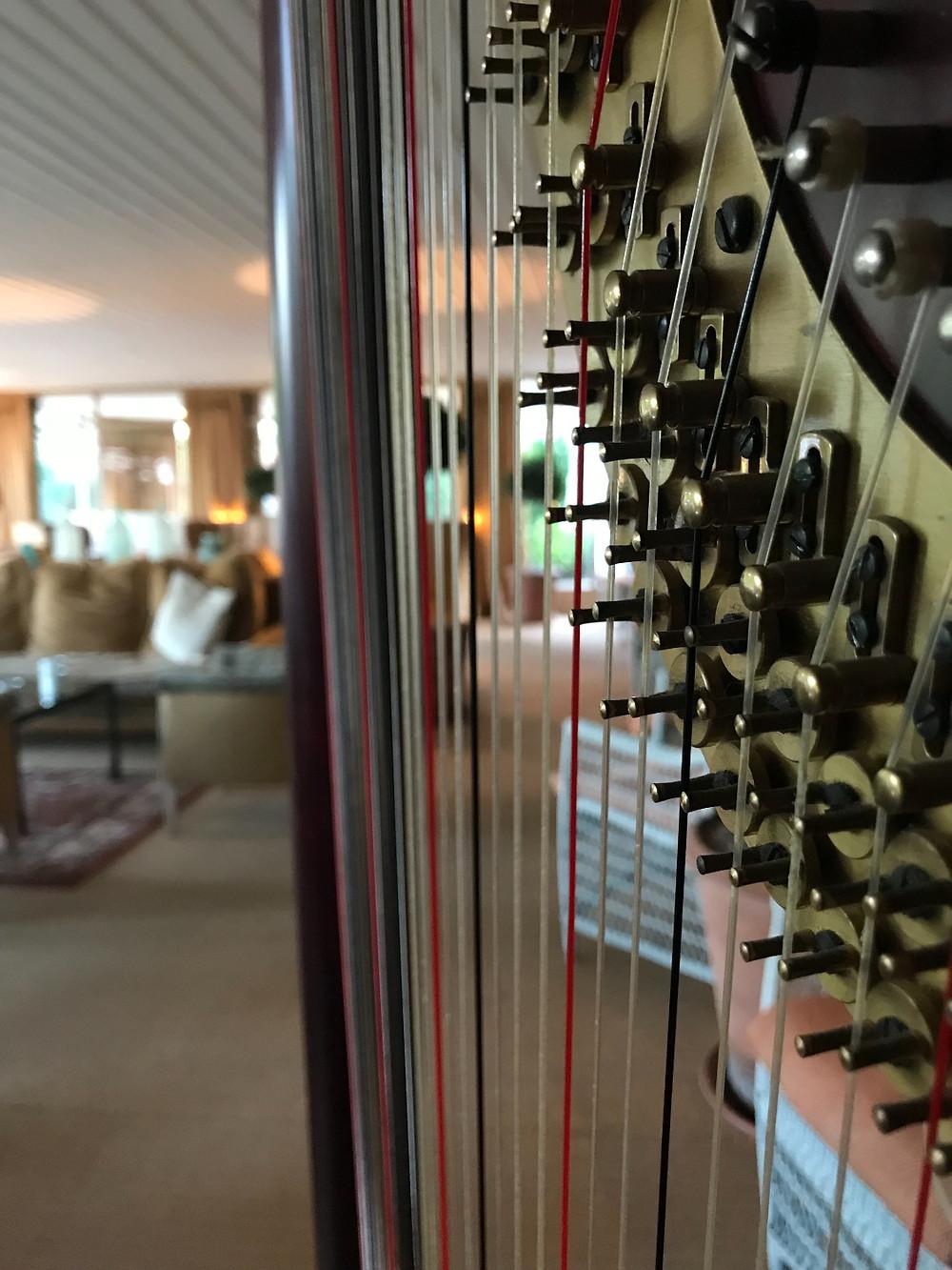 Harp at Champneys