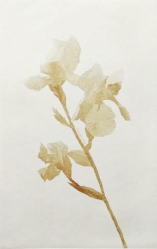 Iris I (2020) von Jasmina Michajlow