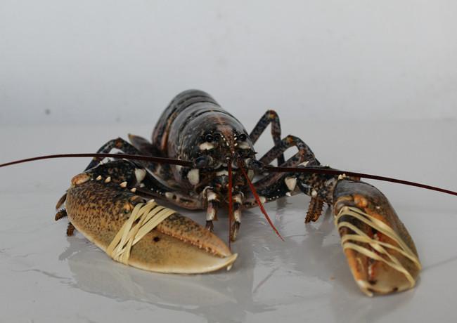 Deli Lobsters 2.JPG.jpg