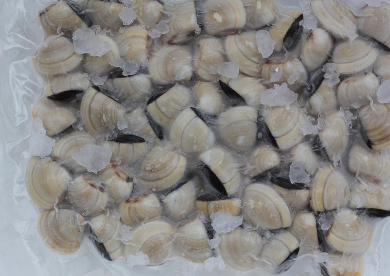 Frozen Clams in Shell.JPG.jpg