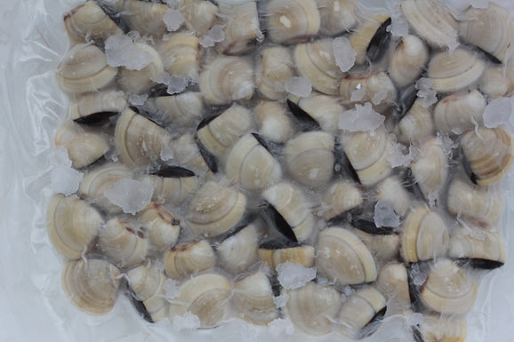 Clams In Shell - Frozen