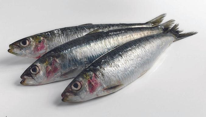 Sardines Wild 1 Kilo Bag - Frozen