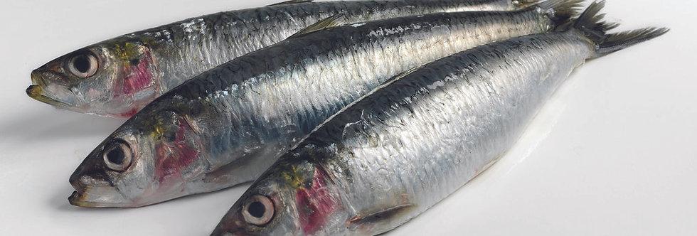 Sardines - Frozen
