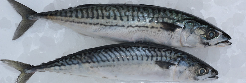 Mackerel Whole - Fresh