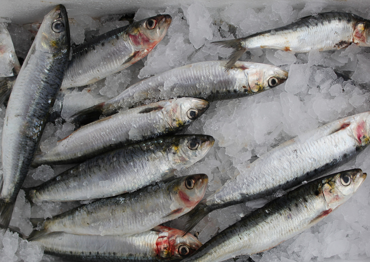 Cornish Sardines.JPG.jpg