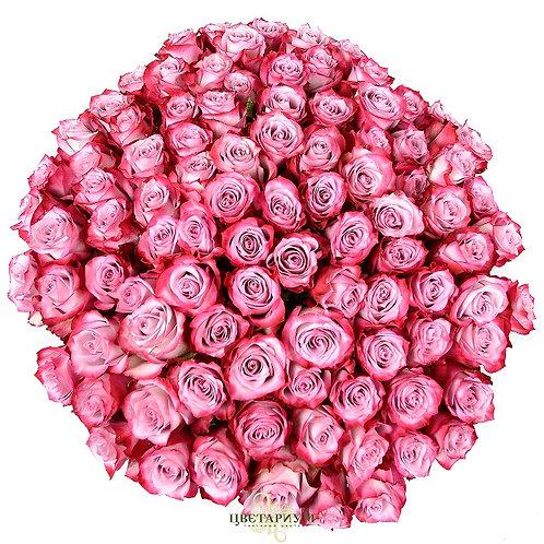 101 роза Deep Water